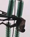 pylon rescue