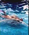 dillon swimming naked
