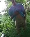 cock in woods