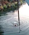 naked swing