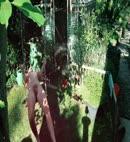 Naked Garden Swing