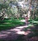 Thomas' Woodland Dick Dance
