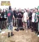 festival lads' cock fight